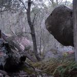 Banksias and granite