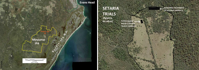 Setaria Trials