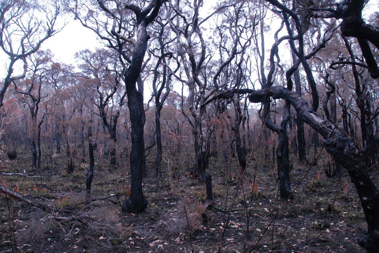 After burn at photo point 50 on 12 December 2013