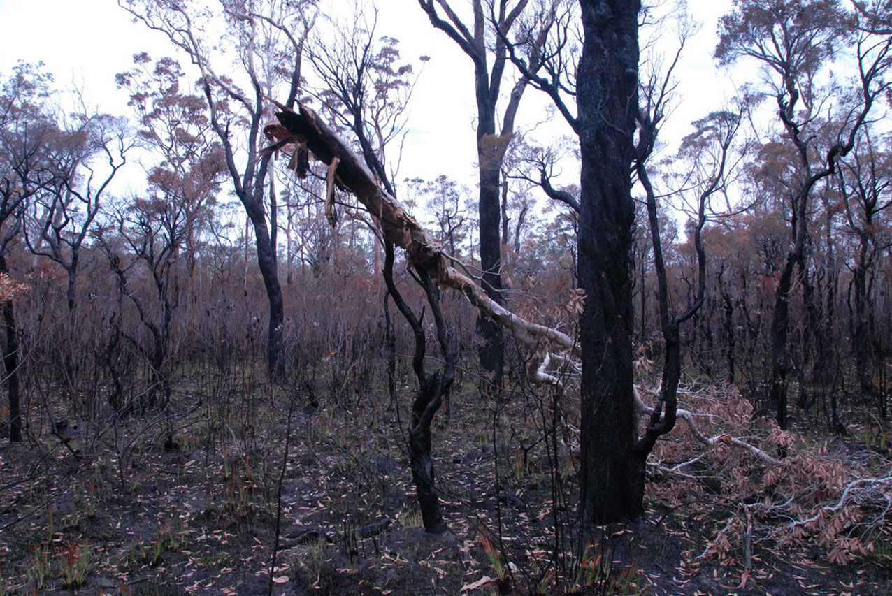 After burn at photo point 26 on 12 December 2013