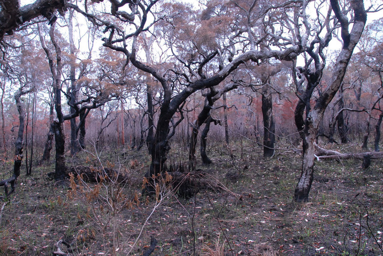 After burn at photo point 1 on 12 December 2013
