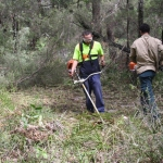 Image 5: Ngunya Jargoon IPA rangers brush cutting ground vegetation from around scar tree