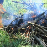 Image 9: First pile burn of coral trees