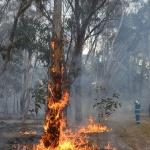 Wattleridge plot burn