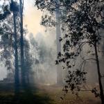 Firesticks Training at Yarrawarra Cultural Centre May 2014 - Burn 10