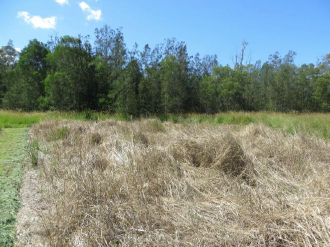 Seteria Grass Trials