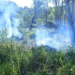 Image 8: First pile burn of coral trees