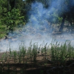 Image 13: Second pile burn of coral trees