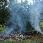 Image 14: Second pile burn of coral trees