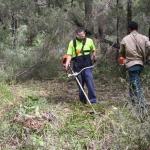 Image 5: Ngunya Jargoon IPA rangers brush cutting ground vegetation from around scar tree