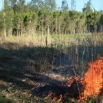 Image 10: First pile burn of coral trees