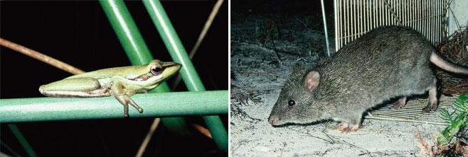 Ngunya-Jargoon-Threatened-species