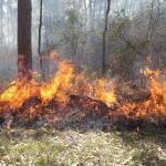 Dobies Bight Burn