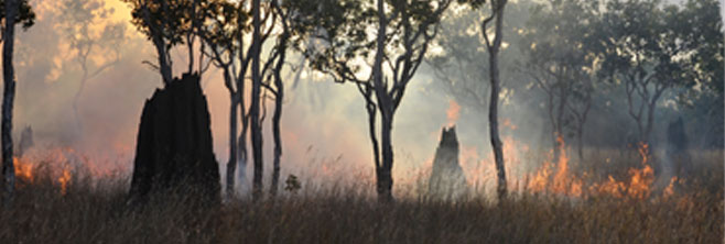 ngukurr_termite-mounds-and-fire