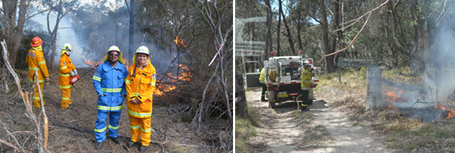 wattleridge-and-warra-np-burns